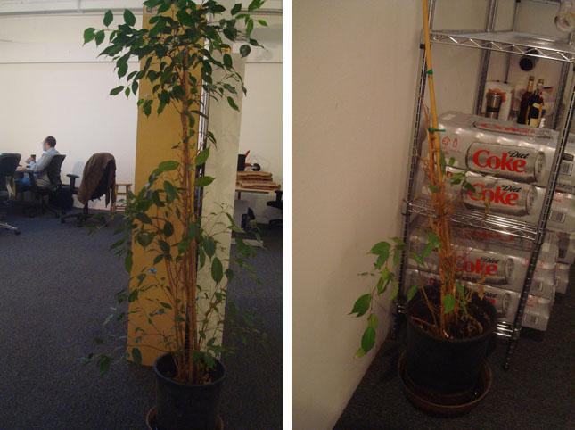 Plant vs. Plant